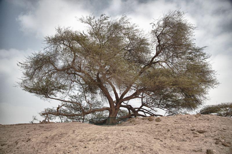 Tree_HDR