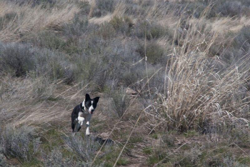 Piper Running