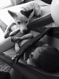 Puppy watching