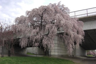 Favorite_tree