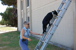 Up_ladder