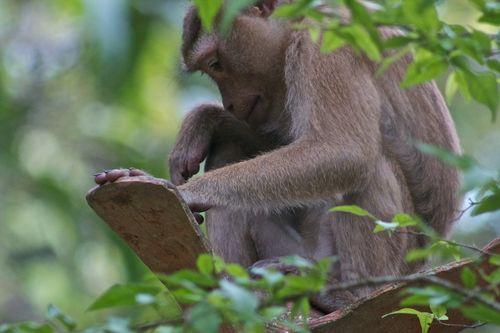 Monkey perch